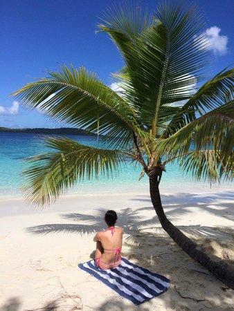 Favorite Palm Tree In St John Foto De