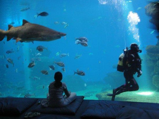 Palma Aquarium: Наблюдение за акулой и водолазом;)