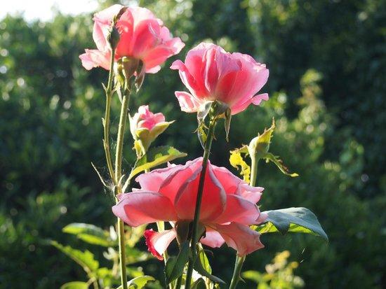 Caretta Caretta Pension: fiori