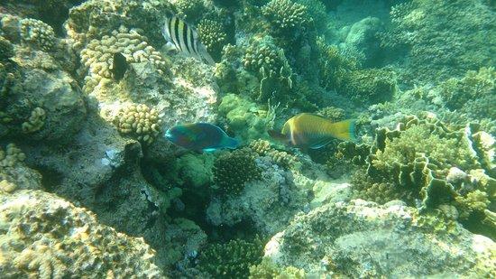 lti Tropicana Grand Azure : rafa na końcu molo