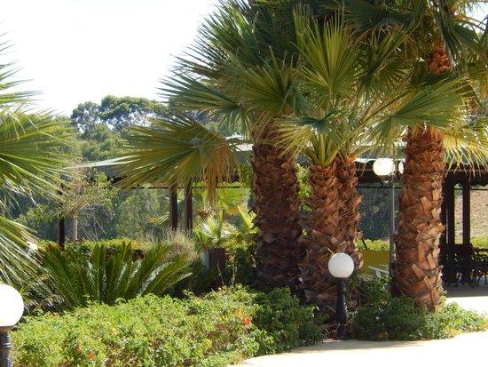 Demetra Resort: Hotel area