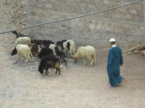 Sarayas : Local village farmers, surrounding riad