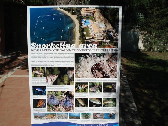 Negroponte Resort Eretria : Plage délimitée et vue des fonds marins.