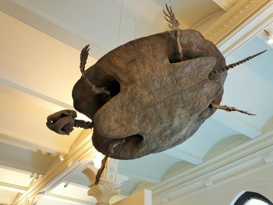 American Museum of Natural History: plenty to see