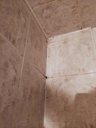 Best Western Hotel De La Plage: Crasse et moisissures dans la douche