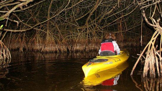 Ivey House: Twilight paddle tour, Everglades, FL