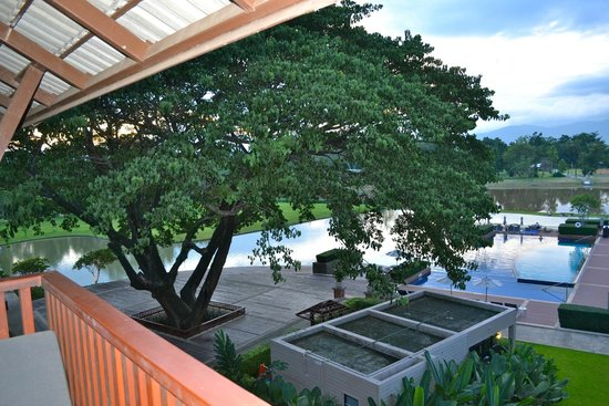 Le Meridien Chiang Rai Resort: Beautiful giant tree by the pool