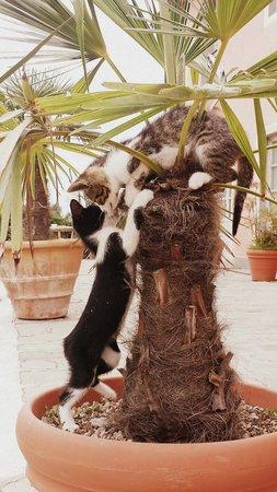 Casal Sant'elena: i cucciolini che giocano :)