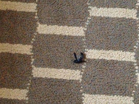 Super 8 Garner/Clayton/Raleigh: Wasp/hornet...whatever, it's still a bug!