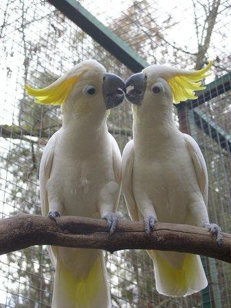Il Parco Degli Uccelli
