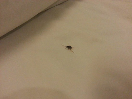 POP! Hotel Teuku Umar Denpasar: cockroach on my bed