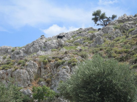 SunConnect Kolymbia Star: Такие вот козы гуляют по горам