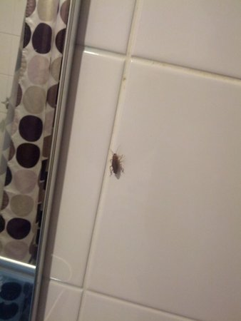 The Maisonette: Roach in the bathroom