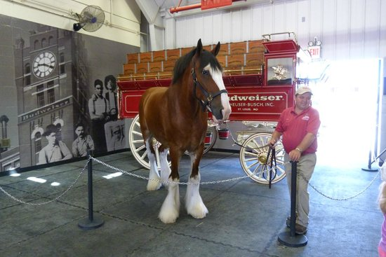 Warm Springs Ranch: Duke, their goodwill ambassador, poses for pictures with visitors.