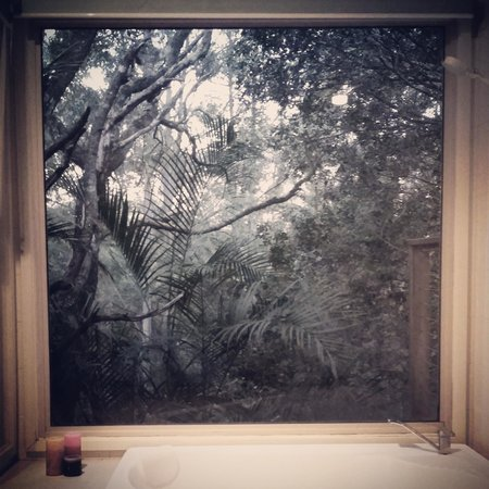 Kondalilla Eco Resort : Looking out our spa window