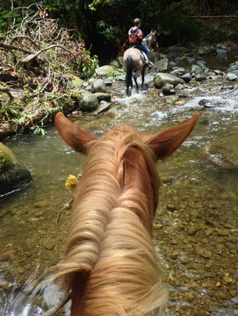 Trogon Lodge San Gerardo de Dota: Horse Back Riding