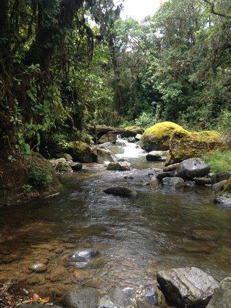 Trogon Lodge San Gerardo de Dota : Rio Savegre