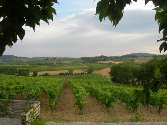 L'Orto di Panza: view from the our terras