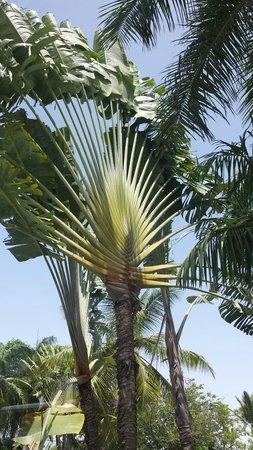 VIK Hotel Arena Blanca: more palm trees