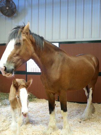 Warm Springs Ranch: Mare with two-day old filly.