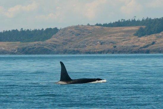 Snug Harbor Resort & Marina: whales seen nearby