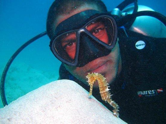 Blue Reef Red Sea Resort : abdo ciao fratello