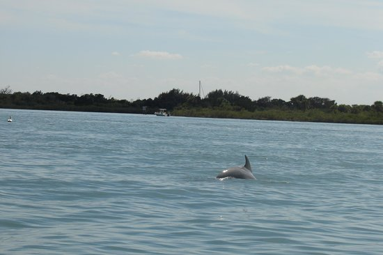 Water Taxi Express: Dolphins swimming nearby in the Intracoastal
