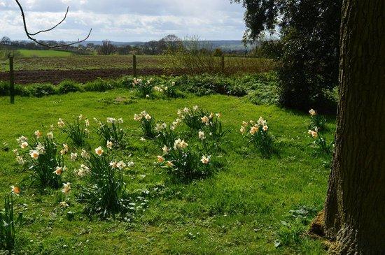 Hidcote Manor Garden: Early spring