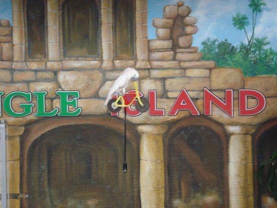 Jungle Island: Show de aves