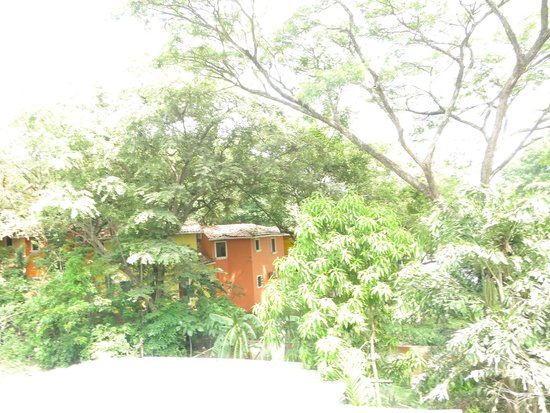 The Chocolate Hotel and 5 Star Hostel: Jungla alrededor