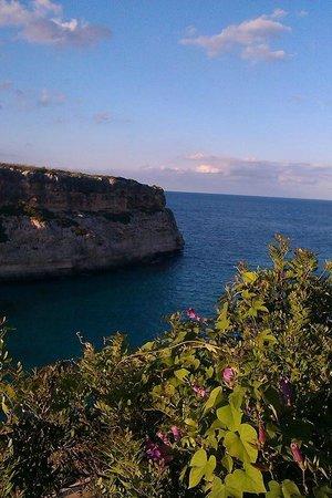 Complejo Calas de Mallorca : Walking from the beach
