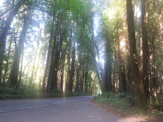 """Avenue of the Giants: One of the """"sunnier"""" spots on the drive"""