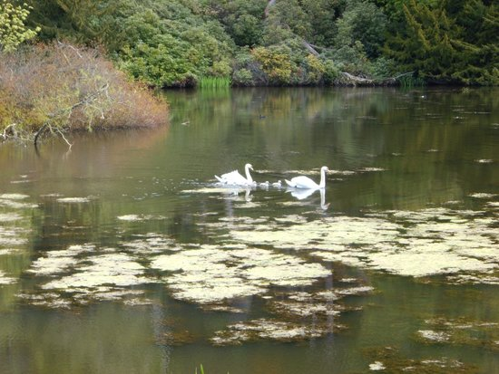 Dundas Castle: The Loch