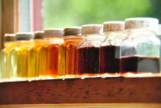 Backroad Discovery Tours: Maple Syrup samples from the Sugar House