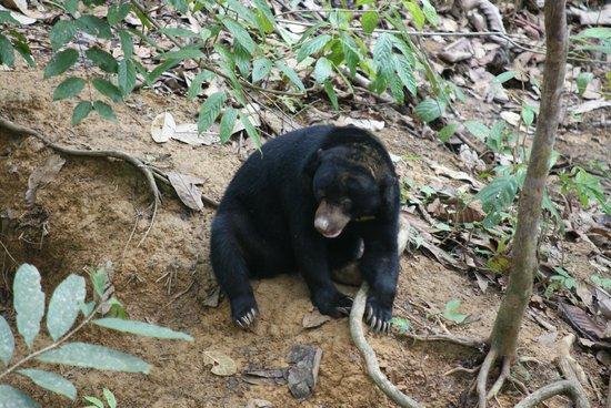 Bornean Sun Bear Conservation Centre: What next?