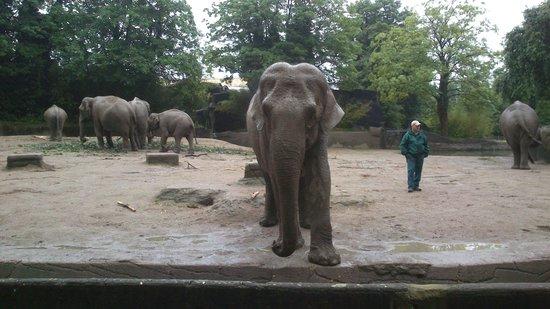 Tierpark Hagenbeck: Elephant waiting for food