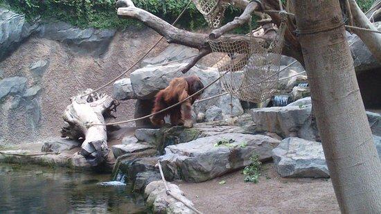 Tierpark Hagenbeck: THe boss