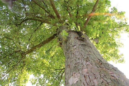 Bristol Cathedral: relax sotto agli alberi