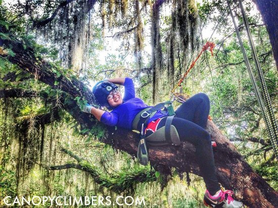 "Canopy Climbers: Chilling in ""The Lounge"""