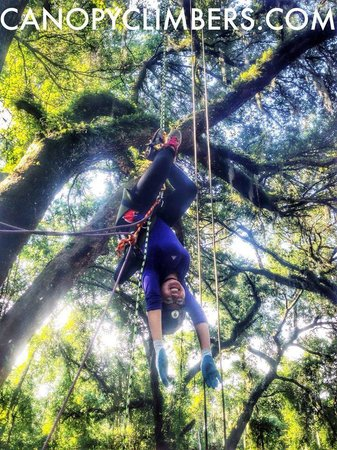 Canopy Climbers: The Bathang