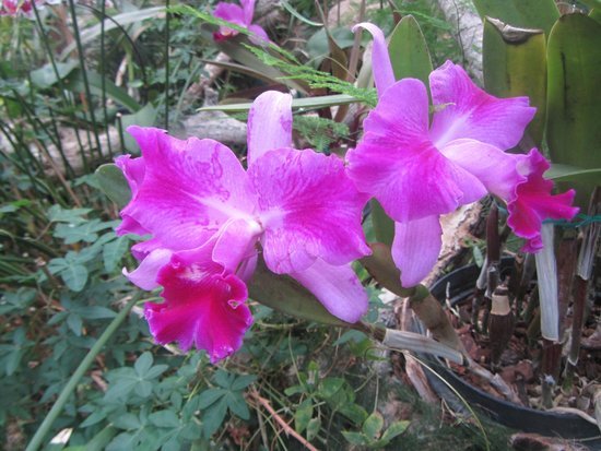 Lake view sitio litre picture of jardin de orquideas de for Jardines de orquideas