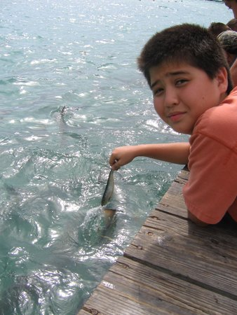 Hungry Tarpon: PERFECT SPOT FOR KIDS,