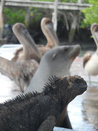 Galapagos Experience: compartiendo en armonia