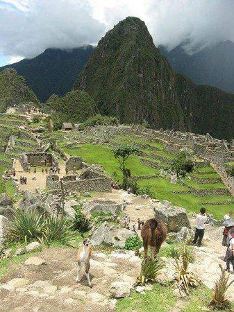 Santuario Histórico de Machu Picchu: Machu Pichu