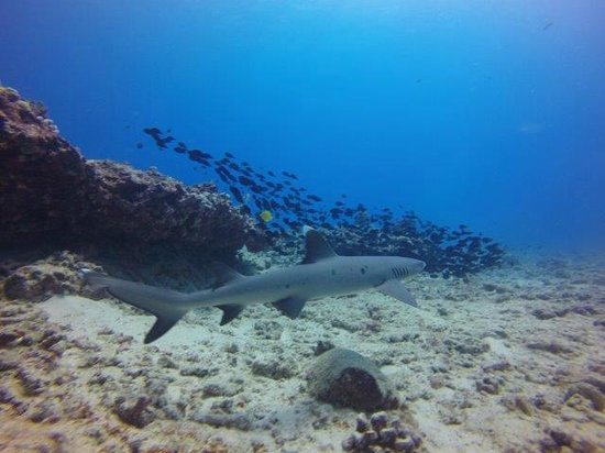 Oahu Diving: Saw sharks!