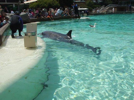SeaWorld San Diego : dolphin interaction