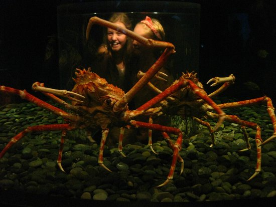 Tennessee Aquarium: Children view huge spider crabs from a bubble inside the tank.