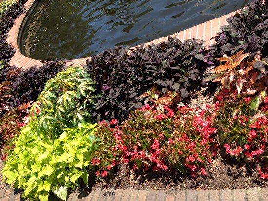 Brookgreen Gardens: Some landscaping