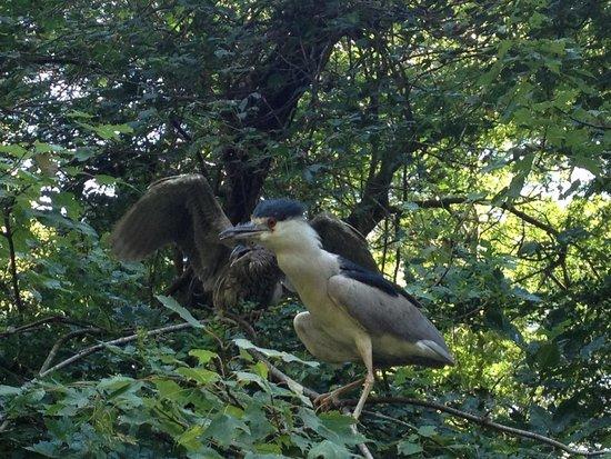 Brookgreen Gardens: Birds at the zoo