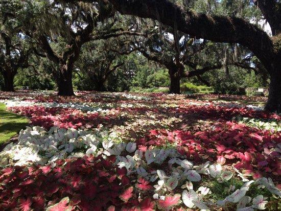 Brookgreen Gardens : Beautiful
